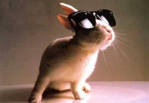 No Hare Monday